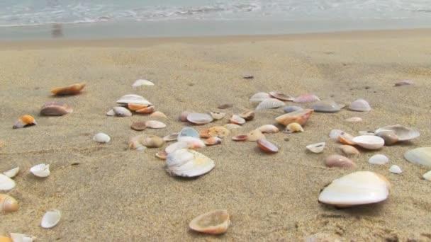 在海滩上的贝壳