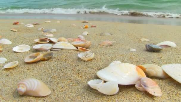 pěkný mušlemi na písečné pláži