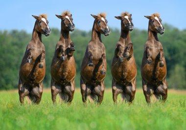 Five rear ponies