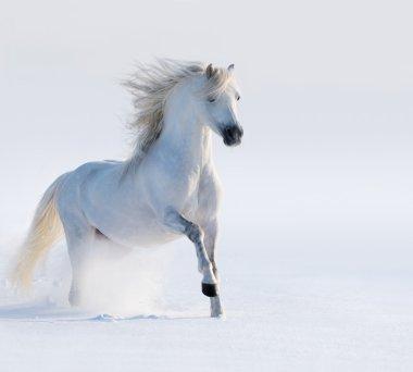 Galloping white horse