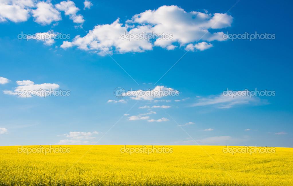 Flower Of Oil Rapeseed In Field Stock Photo Ksena32 25202795