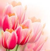 tulipány pozadí