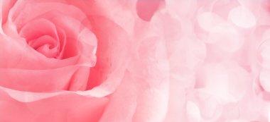 Beautiful pink Rose close up stock vector