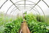 műanyag belső rész hatálya alá tartozó üvegházhatású kertészeti