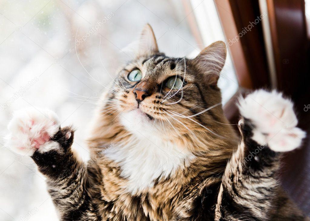 кот забавный фото