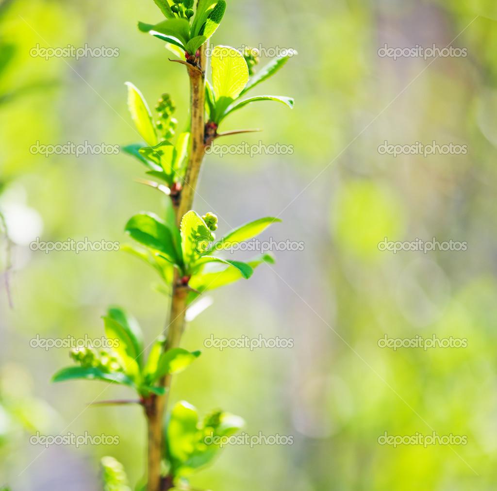 young foliage