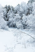 Fotografie zimní stromy na sněhu