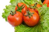 Gurken und Tomaten für Salate bereit