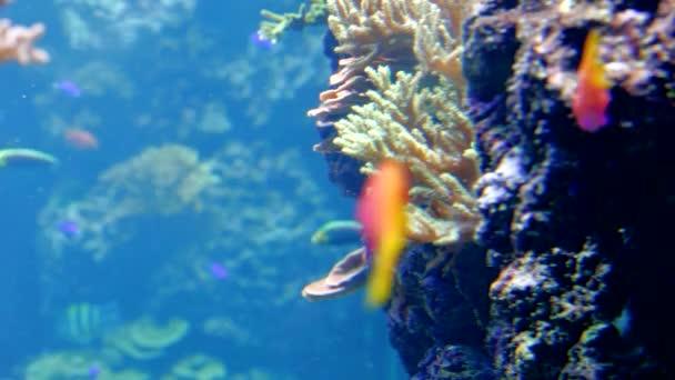 tropické ryby a korály
