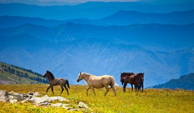 Several horses on mountain peak field