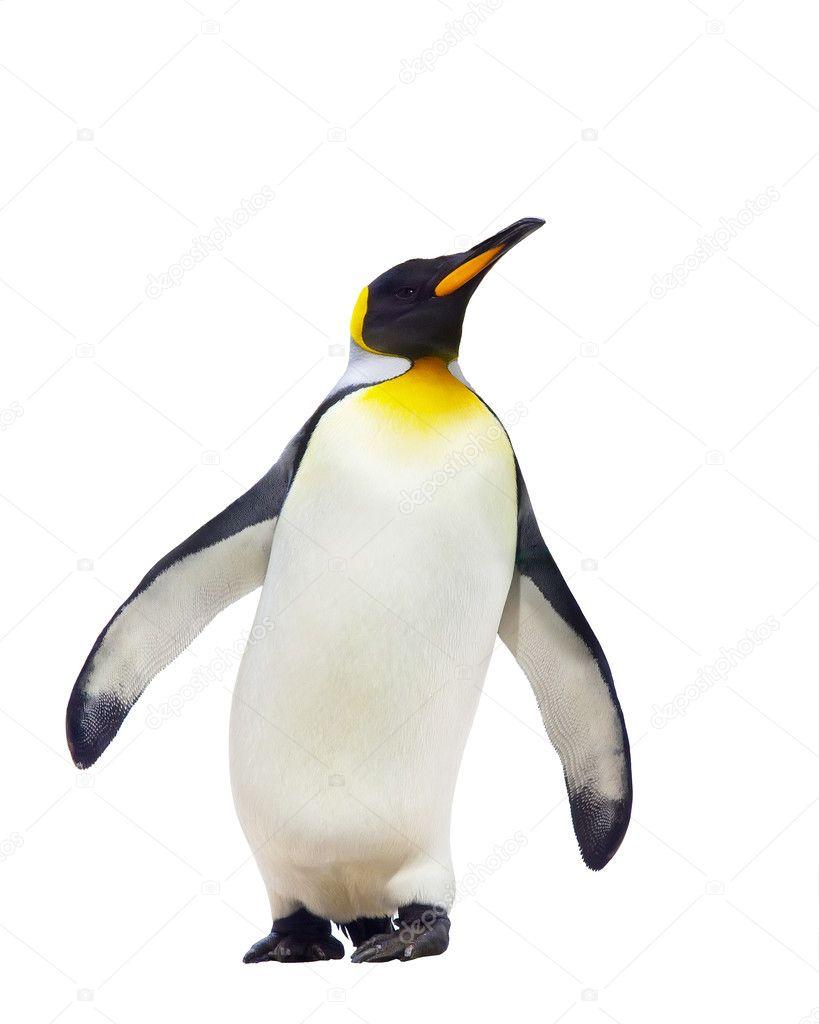 pingüino #hashtag