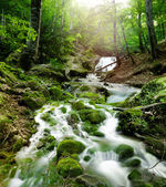 Forest waterfall