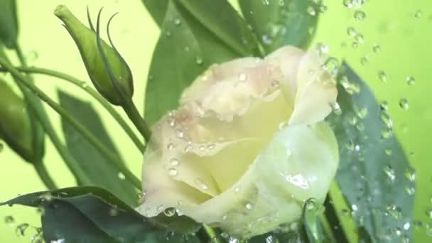 Virág fehér virág alatt esőcseppek a zöld háttér