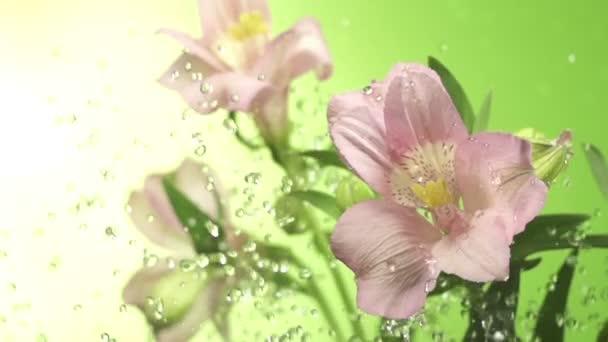 rózsaszín virág virág