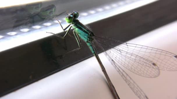 vážka na okno