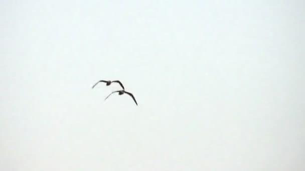 pár ptáků na obloze