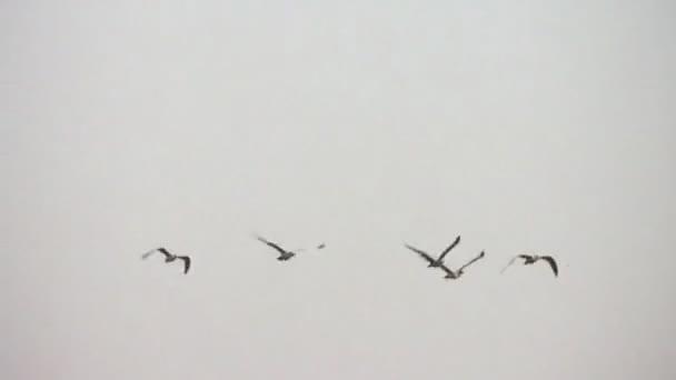 madarak az égen