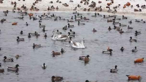 madarak téli tó