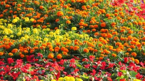 žlutá, oranžová, červená, modrá, fialová záhony