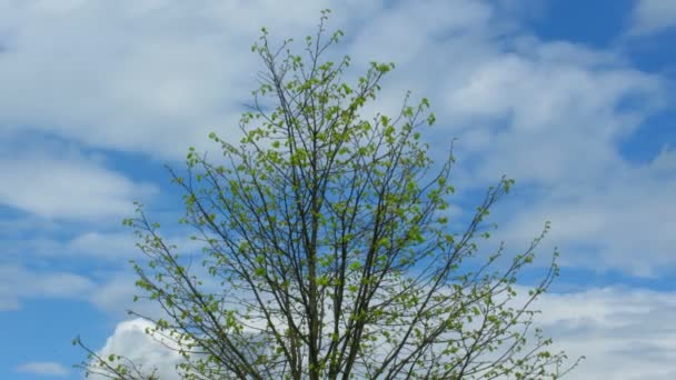 Solitary tree under opened by sky