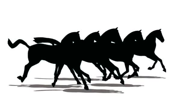 Run of small herd of horses, black silhouette on white background