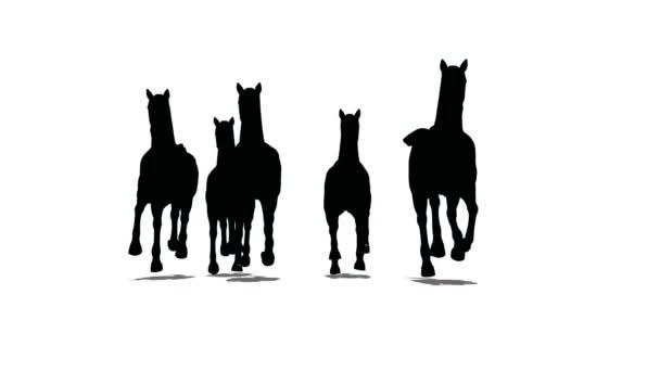 stádo koní běží a běží, čelní pohled, černá silueta na bílém pozadí