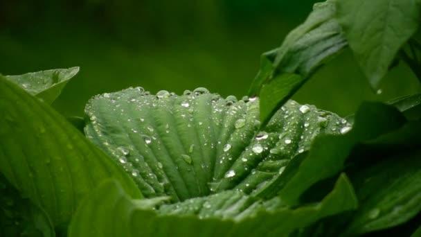 zelené listy s vodou kapky v letním parku během deště
