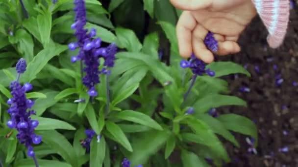 Children hands fingering both shaking stalk and violet flower of plant close up