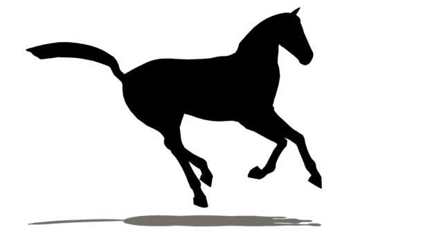 koně s paprsky, pohled zepředu smyčka