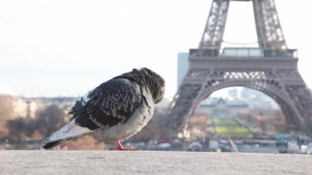 jediný holub proti Eiffelova věž v Paříži, Francie