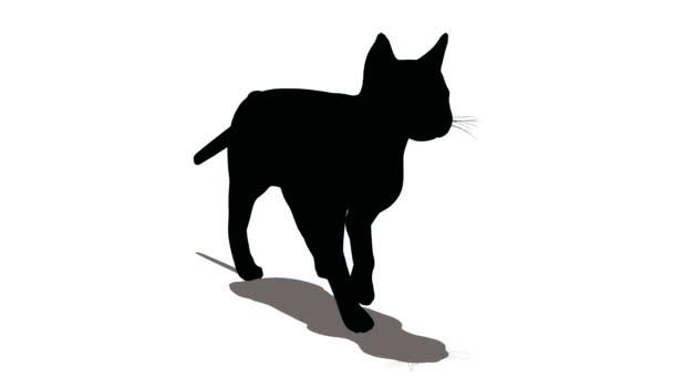 4eca043d07a02 gato va