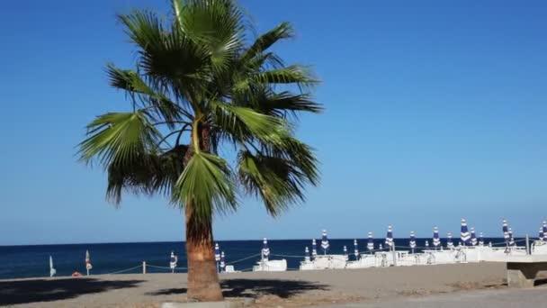 Wind raschelt Blätter hoher Palmen, die am Strand stehen