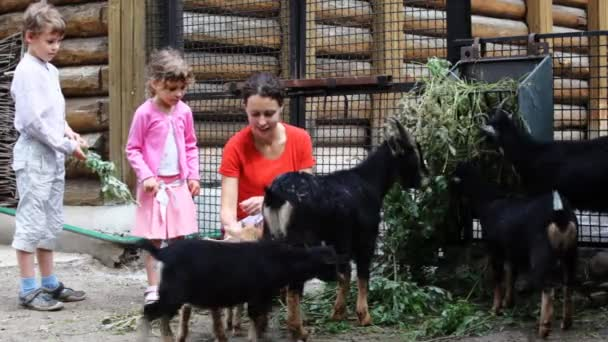 Mother with children feed young goats in village