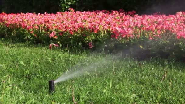 proud vody nalije na záhonu stejných květin