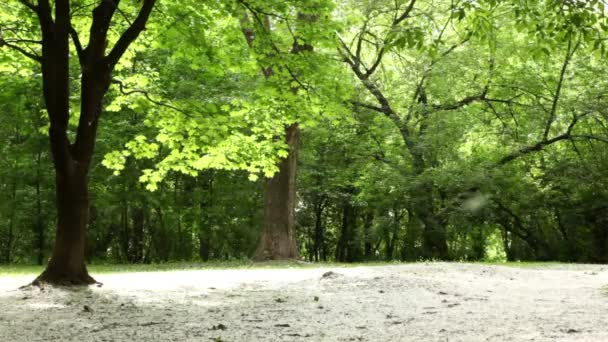 lesní louce všechny rozházené chmýří, které letí ve vzduchu