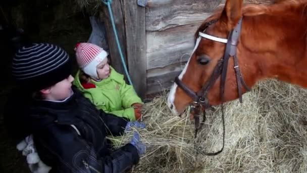 dvě děti chlapec a dívka krmit koně