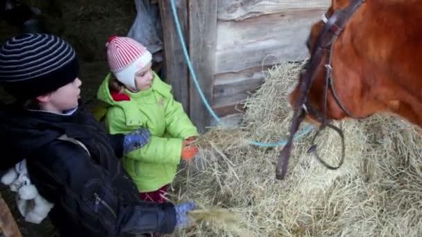 chlapec a dívka krmit koně