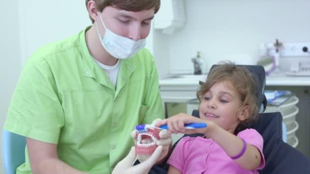 Zubař má čelist a dívka čistí zuby kartáčem