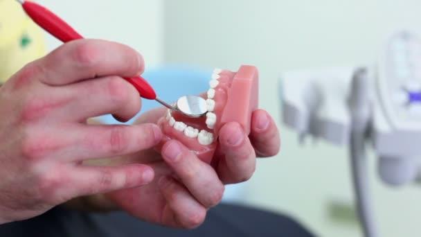 zubař zkoumá zuby čelisti v ruce zrcadlo