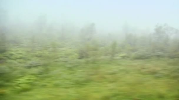 Les se stromy a trávu v mlze, v pohybu