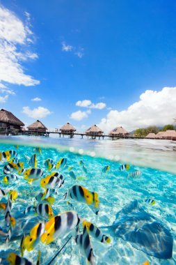 French Polynesia