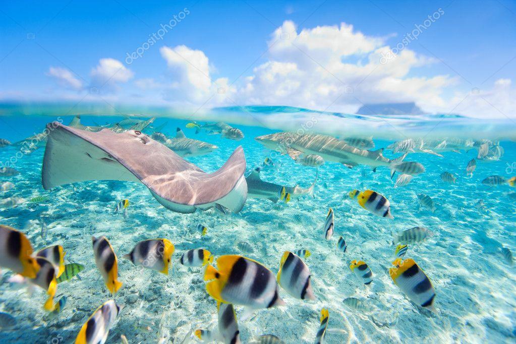 「ボラボラ島」の画像検索結果