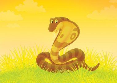 Brown cobra