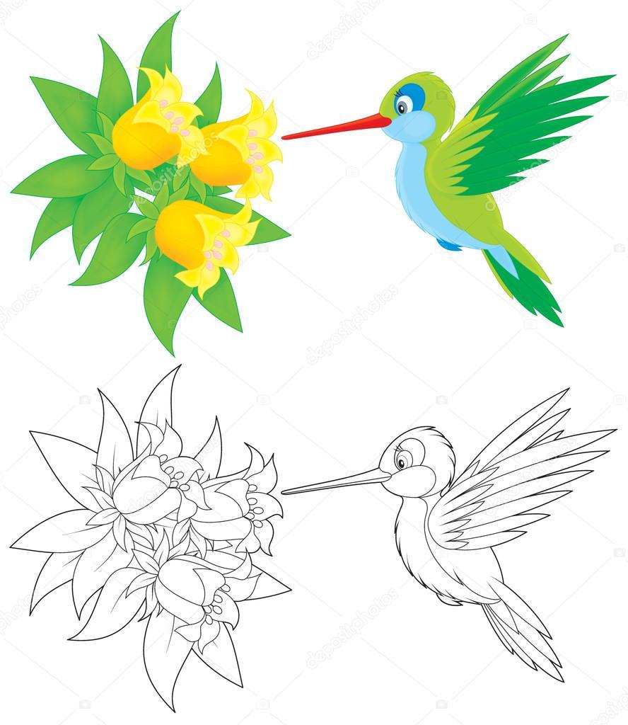 colibrí — Foto de stock © AlexBannykh #18290963