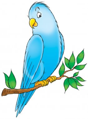 friendly blue parakeet perched on a tree branch.
