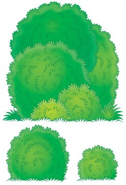 Three different lush green bushes
