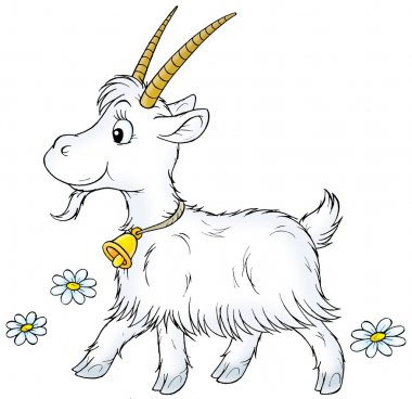 long haired goat with big horns