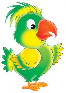 Parrot with a bright orange beak.