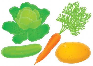 cucumber lettuce carrot and potato