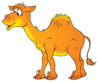 Happy Arabian camel with one hump